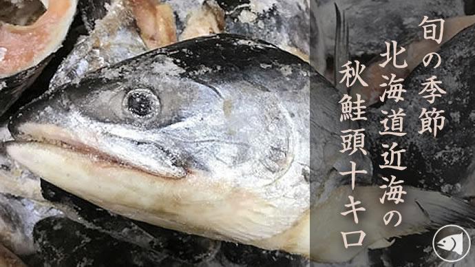 北海道 鮭 釣り 2019